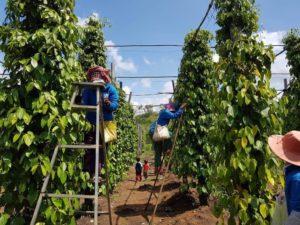 J - FARM農業事業